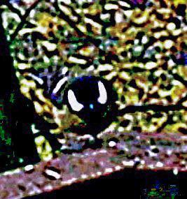 Kohlmeise(Parus major(L. 1758)) auf einem Holzgeländer