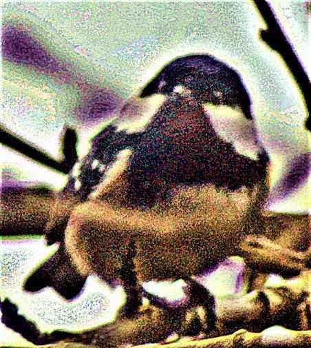 Tannenmeise(Periparus ater(L. 1758)) auf einem Ast ruhend