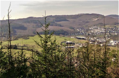 Absterbende Rotbuchen(Fagus sylvatica(L.)) am Hirschberg