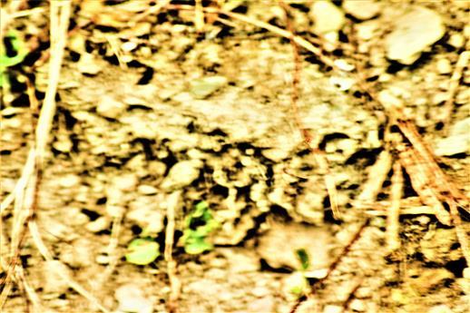 Aussschnitt einer kleiinen Lehmböschung mit einer kleinen Kolonie von Wildbienen