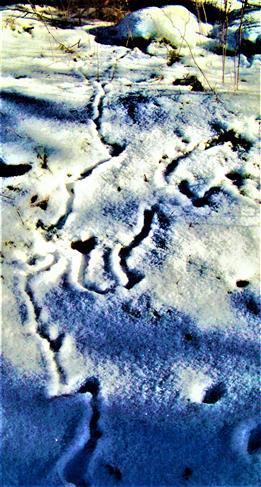 Gänge von Mausen im Schnee am Waldrand