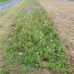 Anreiz für weitere Projekte zum Ackerrandstreifen?