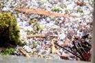 Graupel im Garten 1. März 2017