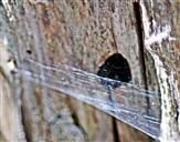 Ein Spinnennetz vor dem Ausflugloch -