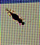 Staublaus(Psocoptera) als Gast am Bildschirm