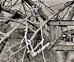 Zwei Blaumeisen(Cyanistes caeruleus(L. 1758)) neben sowie eine Kohlmeise(Parus major(L. 1758)) am Vogelfutterhaus in der Dämmerung