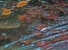 Bildung von Oberflächeneis kann auch einer gewissen Windformung unterliegen
