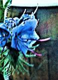 Blüten des Gewöhnlichen Natternkopfes(Echium vulgare(L.))