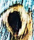 Kleine Asthöhle eines Obstbaumes