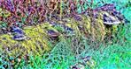 Baumstamm mit Rotrandigem Baumschwamm bzw. Fichtenporling(Fomitopsis pinicola(Sw. ; Fr.) P. Karst.)