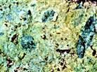 Reste von Blättern eines Glossopteris-Farnes in einer Grauwacke
