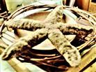 Gemeiner Seestern(Asterias rubens(L. 1758))