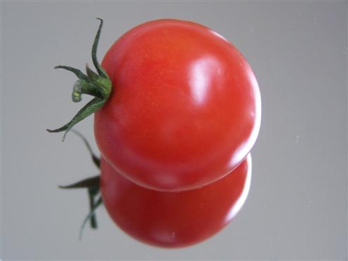 Tomate (Solanum lycopersicum)