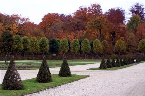 Geometrie der Bäume