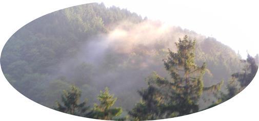 Nebel-Wolkenbildung im Schwarzbachtal