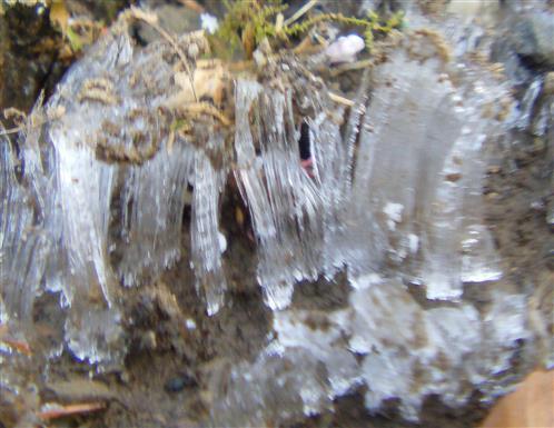 Eisnadeln - Bodenfrost