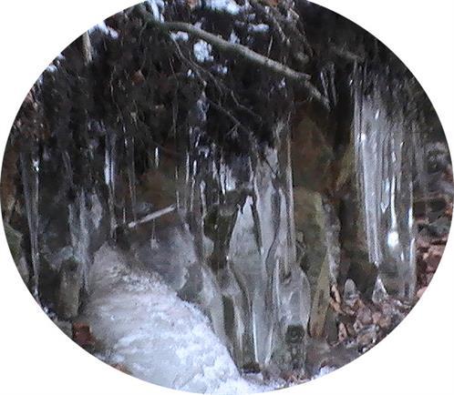 Winterlicher Waldboden