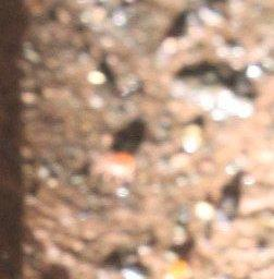 Raubmilbe(Gamasina) am Komposter