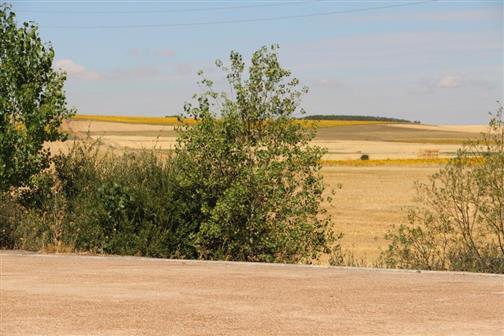 Getreide- wie Sonnenblumenfelder