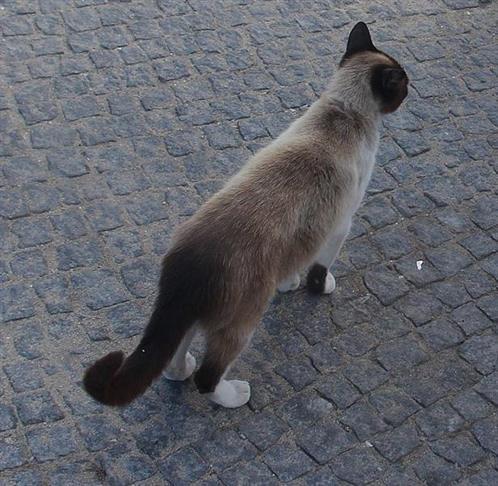 Eine Katze(Felis)