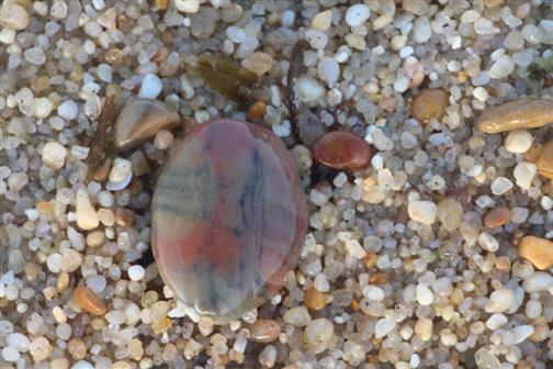 Farbiger Kieselstein am Strand