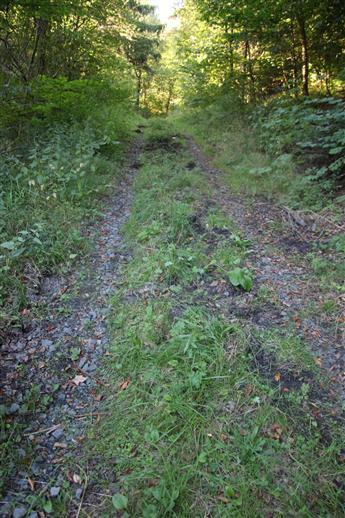 Spuren eines Umbruchs durch Schwarzwild(eine Bache führt drei Frischlinge)