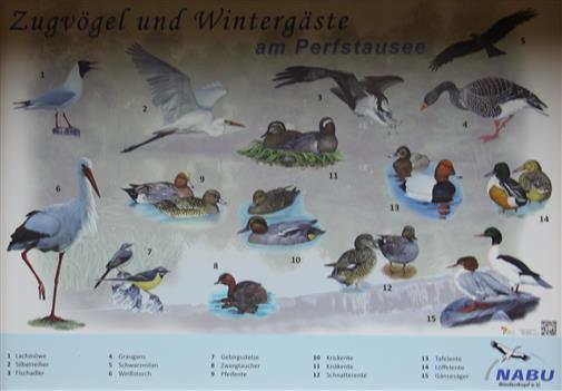 Schautafel am Perfstausee zur Wasservogelwelt