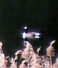 Kanadagans(Branta canadensis(L. 1758)) auf dem Lohmühlenweiher 3