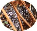 Fänger von Regentropfen(Spinnennetz)