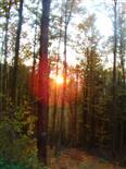 Sonnenuntergang über dem Schwarzbachtal im Hirschbergwald