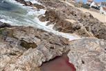 Ein kleiner Priel[kleine Meerespfütze](rot gefärbt)