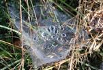 Nebel oder Tau gefangen als Tautropfen im Spinnennetz