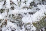 Raureif auf Gras(Wiese)