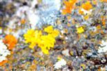 Flechten auf einem Gesteinsbrocken