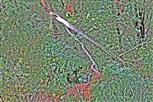 Gemeiner Wacholder(Juniperus communis(L.)) Windwurf