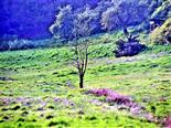 Abgestorbener Baum auf einer Weide