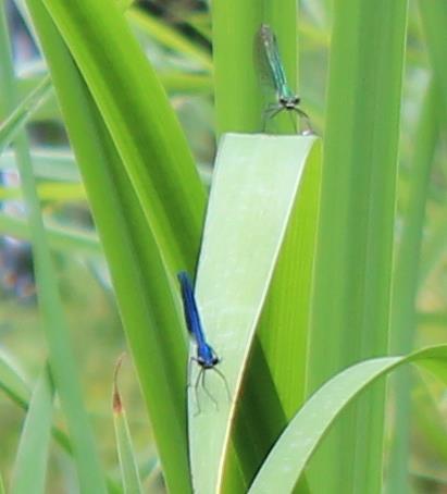 Blau / Grün