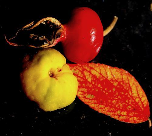 Herbstkomposition I