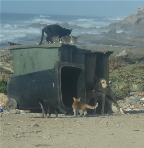Slumbewohner Katz und Hund