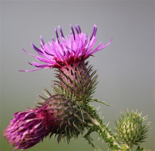 Werden - Blühen - Vergehen