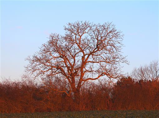 Baum leuchtet in der Morgensonne