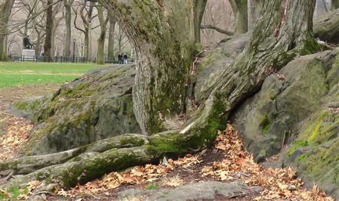 Dreiklang Moos - Holz - Stein
