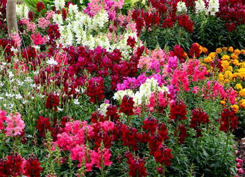Gärtners Freude