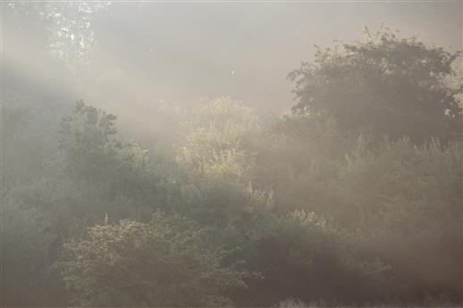 Zartes Morgenlicht