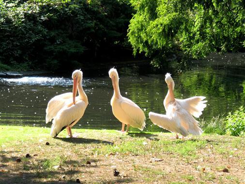 Hygiene - Übungsstunde bei Pelikans
