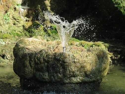 Wasserkelch