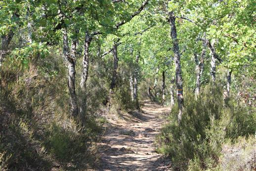 Wanderweg in der Provence