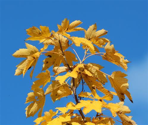 Herbst Blau - Gelb