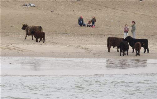 Menschen und Rinder am Fluss