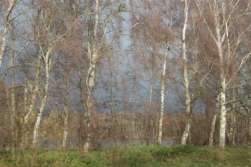 Birken, See, Schauerwolken